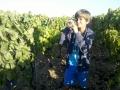 Giovani viticultori a lavoro